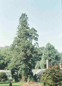 OL-Schloßgarten-14.09.1958-G-NJ-KF